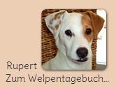 Welpentagebuch Rupert